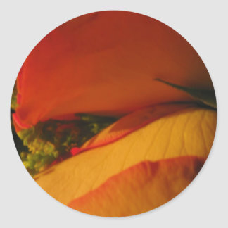 """""""Roses in Golden Orange and Yellow"""" Classic Round Sticker"""