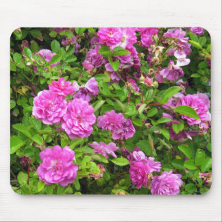 Roses in Olympia Farmer's Market Garden Mouse Pad