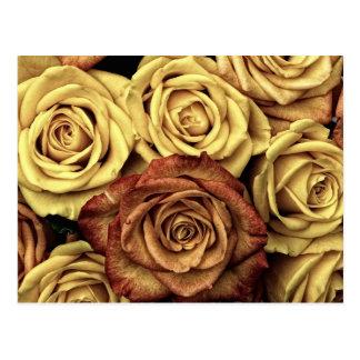 Roses in Sepia Tone Postcard