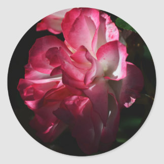 Roses in the Dark Stickers