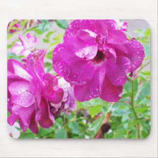 Roses in Winter Mouse Pad