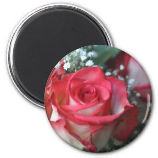 roses refrigerator magnets