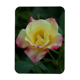 Roses mean Love! Magnet