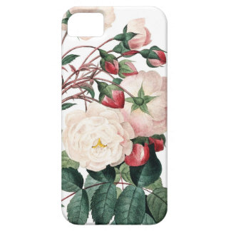 Roses of Redoute Les Roses vintage image iPhone 5 Cases