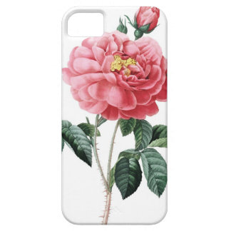 Roses of Redoute Les Roses vintage image iPhone SE/5/5s Case