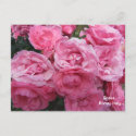 Roses of Rome, Italy Post Card