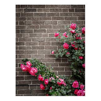 Roses on brick wall postcard