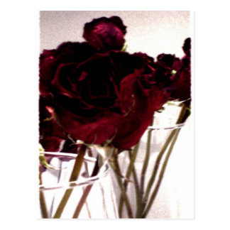 Roses Out Of Bloom Postcard