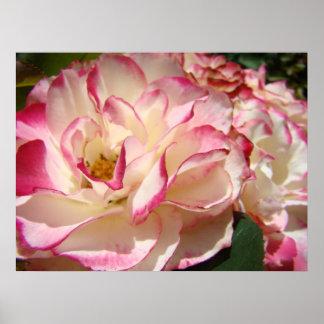 ROSES Pink Rose Flowers Art Prints Posters Art