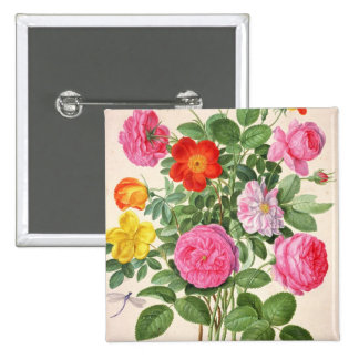 Roses, plate 4 from the Nassau Florilegium (w/c on 2 Inch Square Button