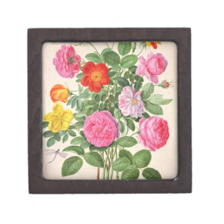 Roses, plate 4 from the Nassau Florilegium (w/c on Jewelry Box