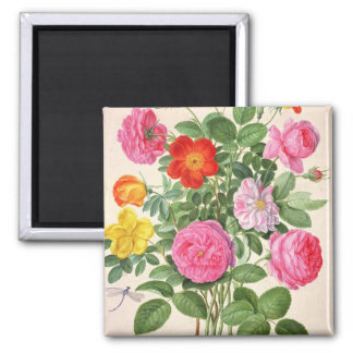 Roses, plate 4 from the Nassau Florilegium (w/c on Magnet