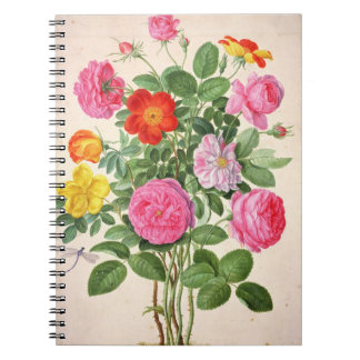 Roses, plate 4 from the Nassau Florilegium (w/c on Notebook