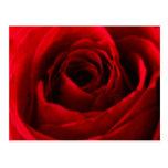 Roses Post Card