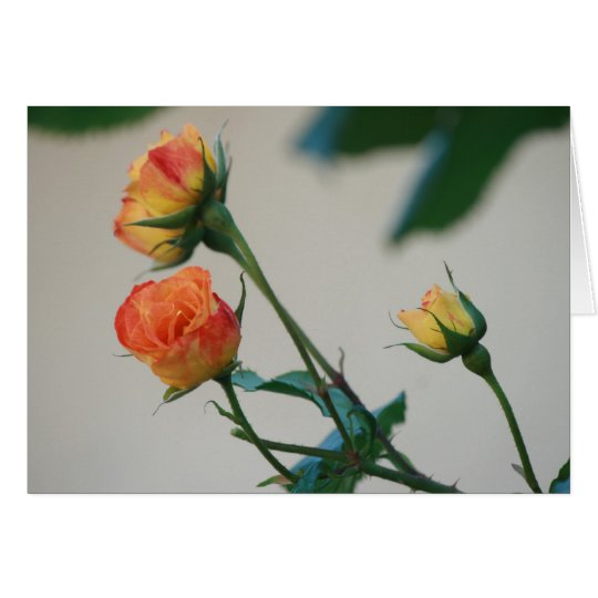 Roses Reaching for the Sun in Harmony Card