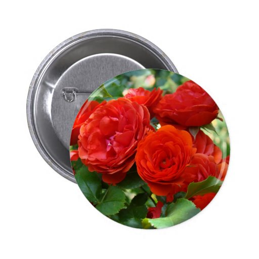 ROSES Red Rose Flowers 2 Cards Gifts Mugs Pinback Buttons