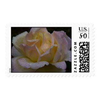 Roses Rosa, Dark Shade Postage