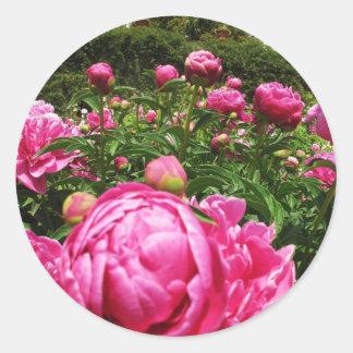 Roses roses roses classic round sticker