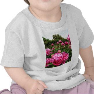 Roses roses roses shirts