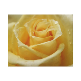 Roses Tear Gallery Wrapped Canvas