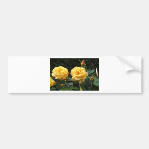 Roses With Raindrops Bumper Sticker
