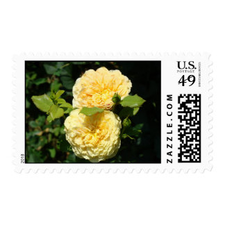 Roses Yellow Rose Flowers postage stamps