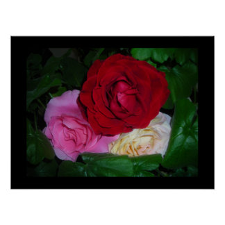 RoseTrio on Black poster-Customize/Personalize Poster