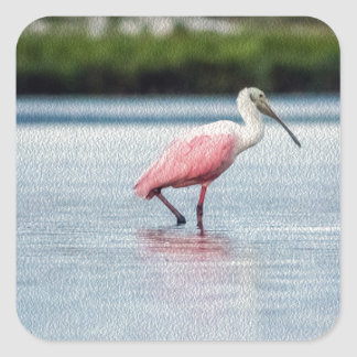 Rosette Spoonbill At Anastasia State Park Square Sticker