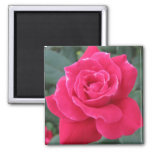 Rosey 2 Inch Square Magnet