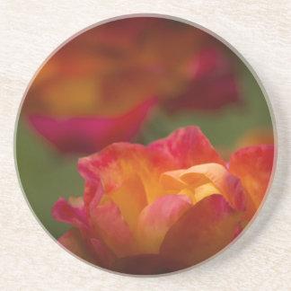 Rosey Coaster