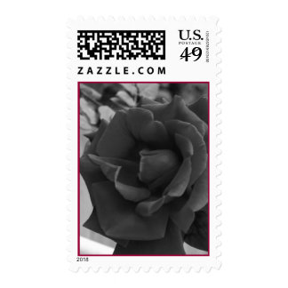 Rosey Postage