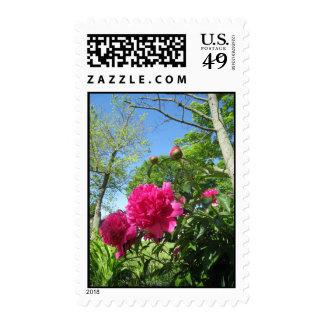 roseypeonies postage