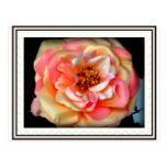 roseyposey post cards