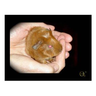Rosie - Guinea Pig Postcard