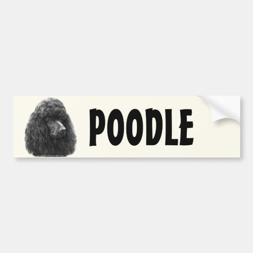 Rosie, Standard Poodle Bumper Sticker