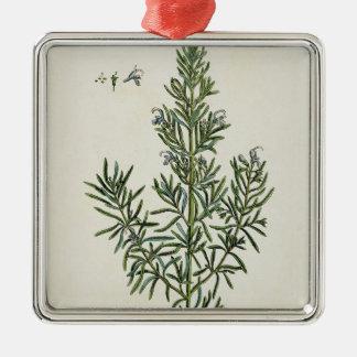 """Rosmarinus Officinalis, """"de un herbario curioso"""",  Ornamento Para Arbol De Navidad"""
