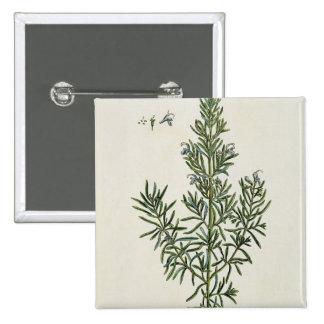 "Rosmarinus Officinalis, ""de un herbario curioso"",  Pin"