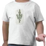 "Rosmarinus Officinalis, ""de un herbario curioso"", Camisetas"