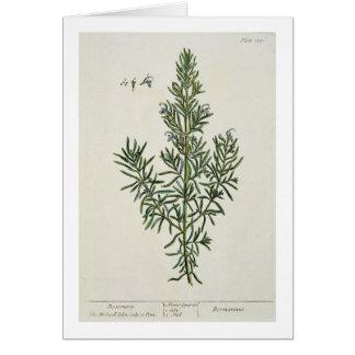 """Rosmarinus Officinalis, """"de un herbario curioso"""",  Tarjeta De Felicitación"""