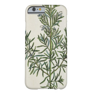 Rosmarinus Officinalis, from 'A Curious Herbal', 1 Barely There iPhone 6 Case