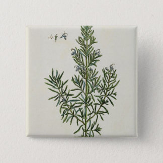 Rosmarinus Officinalis, from 'A Curious Herbal', 1 Button