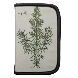 Rosmarinus Officinalis, from 'A Curious Herbal', 1 Folio Planner