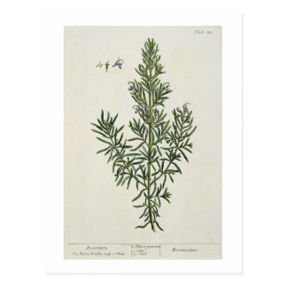 Rosmarinus Officinalis, from 'A Curious Herbal', 1 Postcard