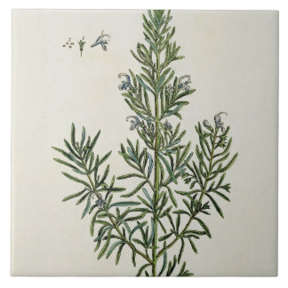 Rosmarinus Officinalis, from 'A Curious Herbal', 1 Large Square Tile
