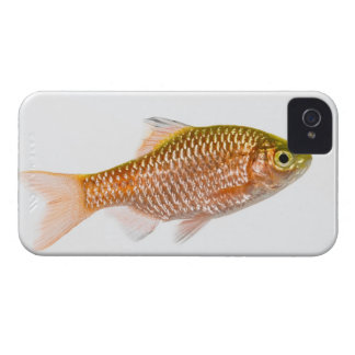 Rosy barb fish (Puntius conchonius) Case-Mate iPhone 4 Case