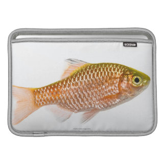 Rosy barb fish (Puntius conchonius) MacBook Air Sleeves