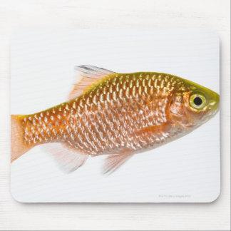 Rosy barb fish (Puntius conchonius) Mouse Pad
