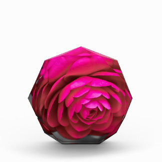 Rosy Camellia Award