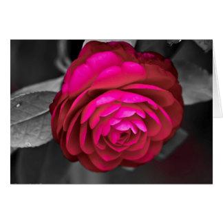 Rosy Camellia Card