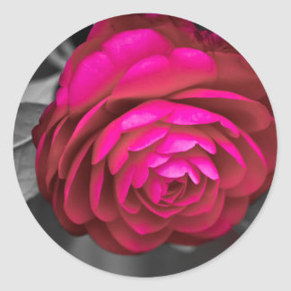 Rosy Camellia Classic Round Sticker